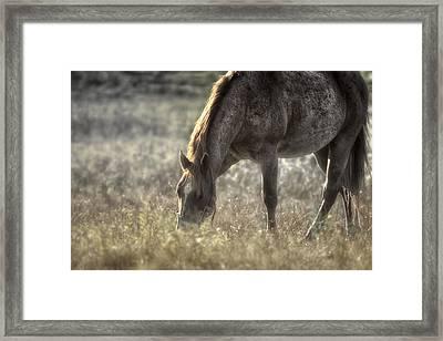 Day Graze Framed Print by Gary Smith