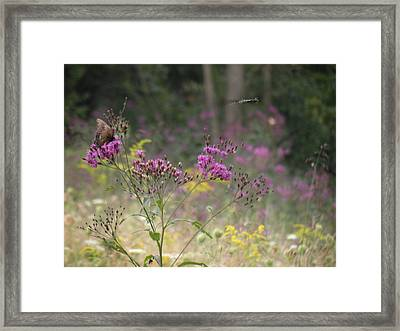 Day In The Meadow Framed Print by Trendle Ellwood