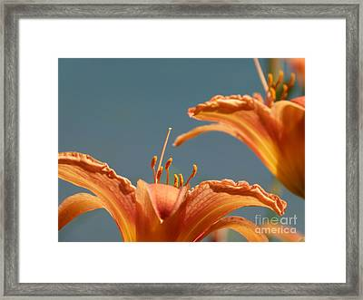 Day Lilies Framed Print by Christine Stack