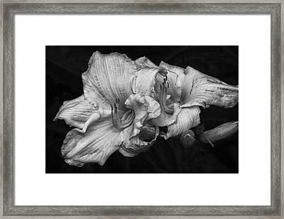Framed Print featuring the photograph Day Lilies by Eunice Gibb