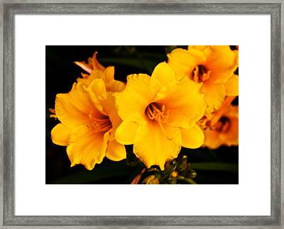 Day Lilly 1 Framed Print by Barry Jones