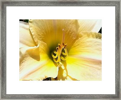 Day Lilly Macro Framed Print by Elizabeth Coats
