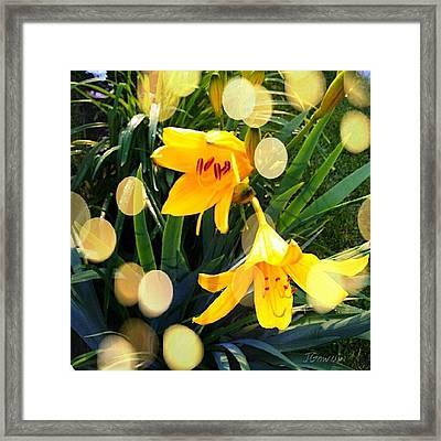 Day Lily. #daylily #lily #lilybuds Framed Print