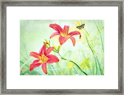 Day Lily Delight Framed Print by Bonnie Barry