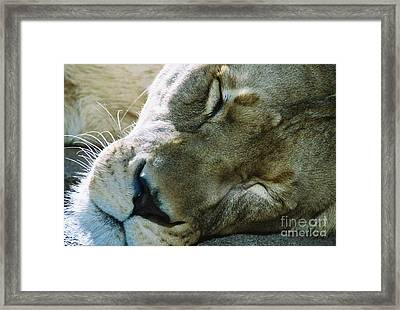 Day Nap Framed Print by Christopher Griffin