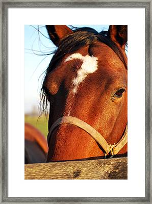 Day Runner Framed Print