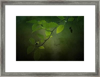 Daybreak Tiptoes In Framed Print by Bonnie Bruno