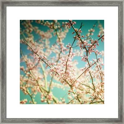 Daydream... Framed Print