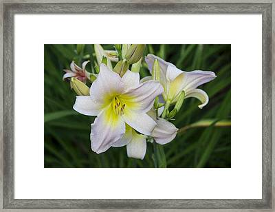 Daylily 1 Framed Print by Michel DesRoches
