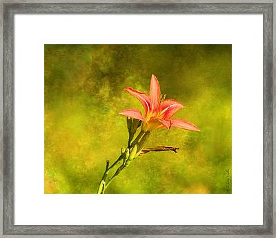 Daylily All Alone Framed Print by J Larry Walker