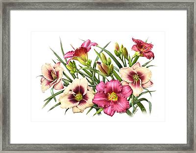 Daylily Bouquet - Rubies Framed Print
