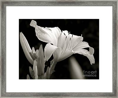 Daylily Study In Bw Iv Framed Print by Sue Stefanowicz