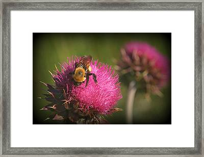 Day's Work.. Framed Print by Al  Swasey