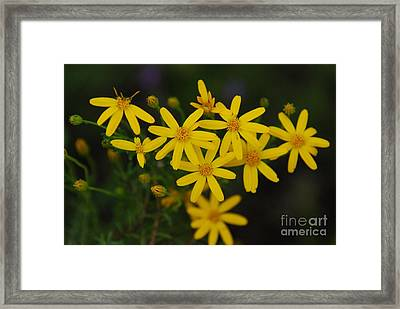 Framed Print featuring the photograph Dbg 041012-0281 by Tam Ryan