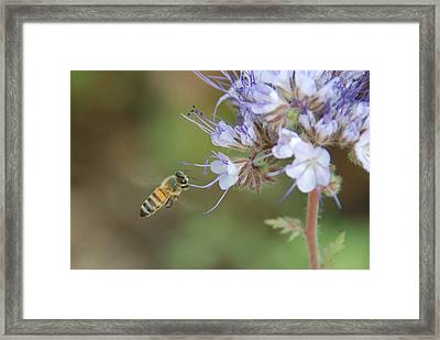 Framed Print featuring the photograph Dbg 041012-0310 by Tam Ryan