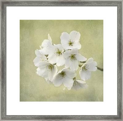 Dc Blossom Framed Print by Kim Hojnacki
