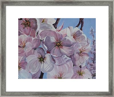 Dc Cherry Blossoms Framed Print