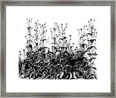 De Vries Experimental Garden Framed Print by Science Source