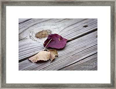 Dead Leaves Framed Print