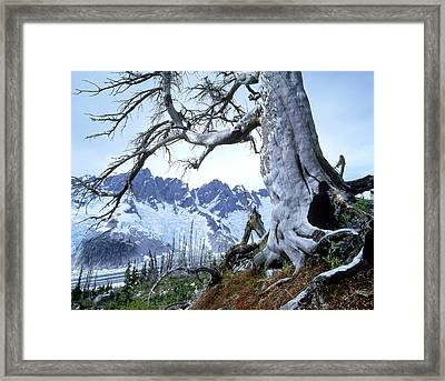 Dead Spruce In Old Forest Fire, Nabob Framed Print by David Nunuk