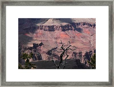 Dead Tree At The Canyon Framed Print