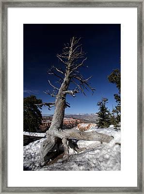 Dead Tree Over Bryce Canyon Framed Print by Karen Lee Ensley