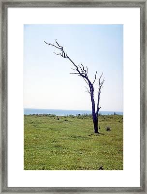 Dead Tree Framed Print by Victor De Schwanberg