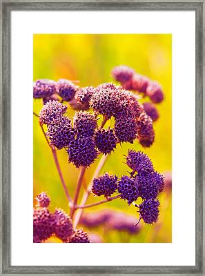 Dead Weed On Lime Framed Print by Bill Tiepelman
