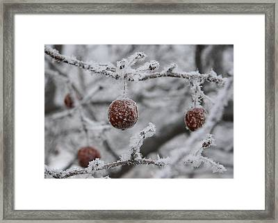 December Apple Tree Framed Print by Ellery Russell