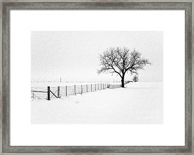 December Framed Print by Sue Stefanowicz