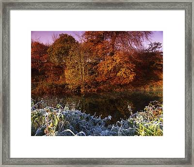 Deciduous Woods, In Autumn With Frost Framed Print by The Irish Image Collection