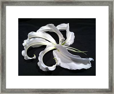 Deconstructed Lily Framed Print