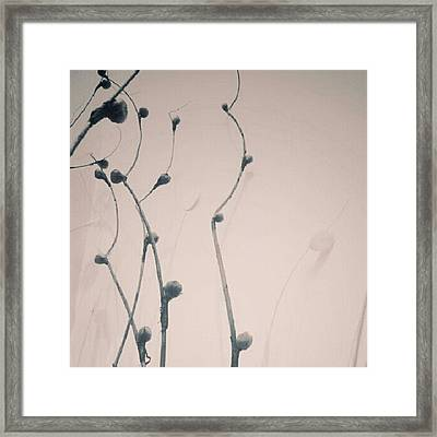 #decor #decorative #decorate Framed Print by Liz Grimbeek