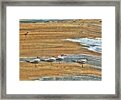 Dee-tern-mined Framed Print by William Fields