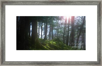 Deep Forest Framed Print by Bruno Santoro