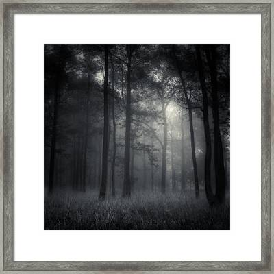 Deep Forest Framed Print by Jaromir Hron