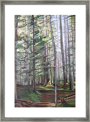 Deep Forest Framed Print by Synnove Pettersen