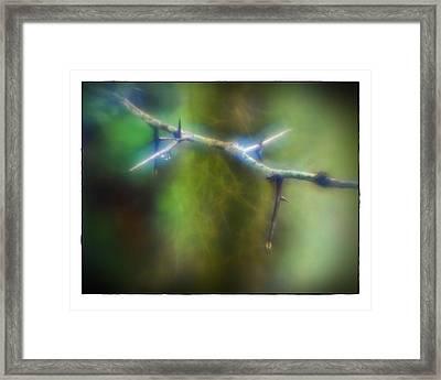 Deep In The Bayou Framed Print by Judi Bagwell