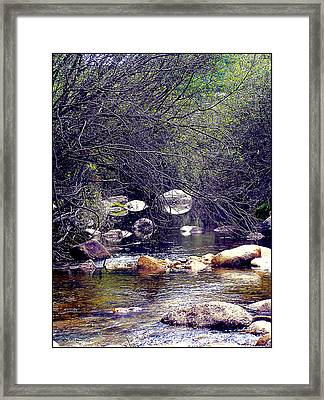 Deep In The Forest Framed Print by Guadalupe Nicole Barrionuevo