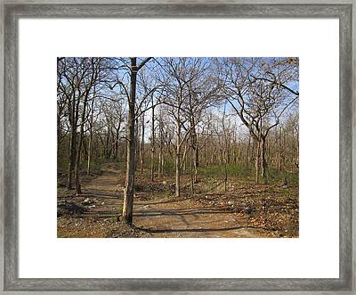 Deep In The Forest Framed Print by ilendra Vyas