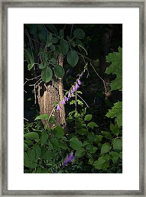Framed Print featuring the photograph Deep by Joseph Yarbrough