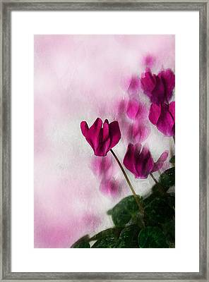 Deep Pink Cyclamen Framed Print by Jacqi Elmslie