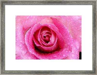Deep Pink Framed Print by