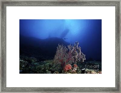 Deep Reef Scene In Fiji Framed Print by Terry Moore