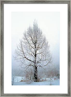 Deep Solitude Framed Print