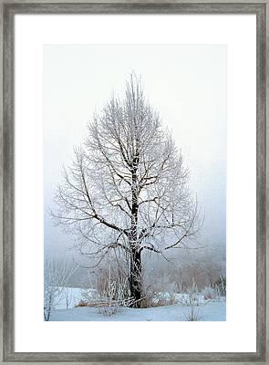 Deep Solitude Framed Print