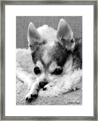 Deep Thought Framed Print by Lorraine Louwerse