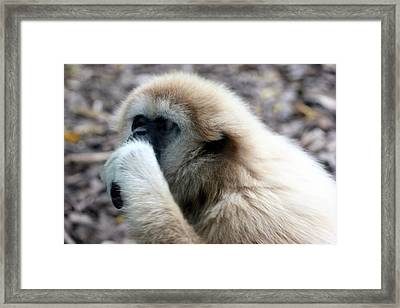 Framed Print featuring the photograph Deep Thoughts by Paula Tohline Calhoun