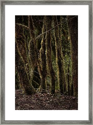 Deep Woods Framed Print by Bonnie Bruno
