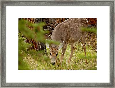 Deer 1661 Framed Print by Larry Roberson
